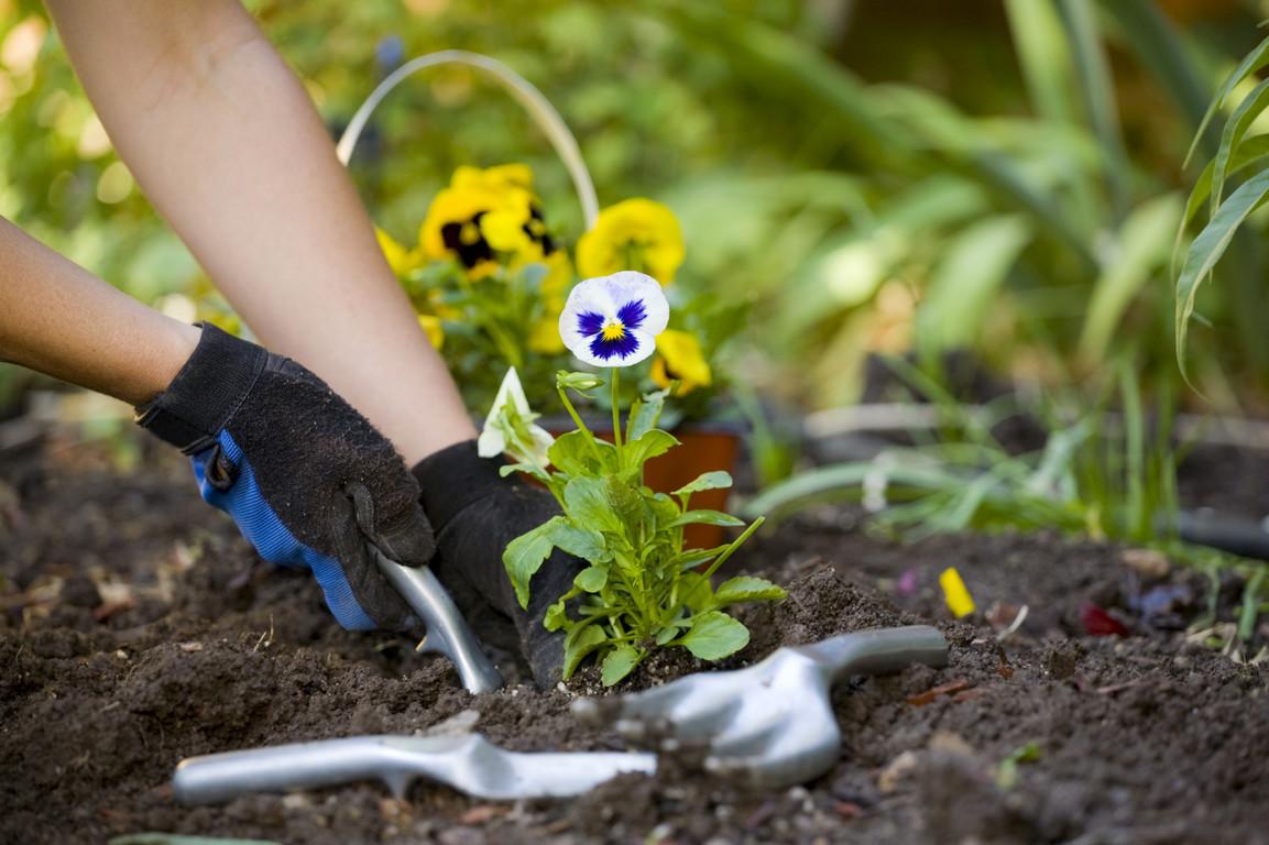 Когда в июне сажать цветы 564