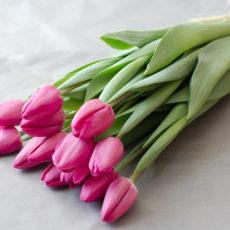 Тюльпан срезка